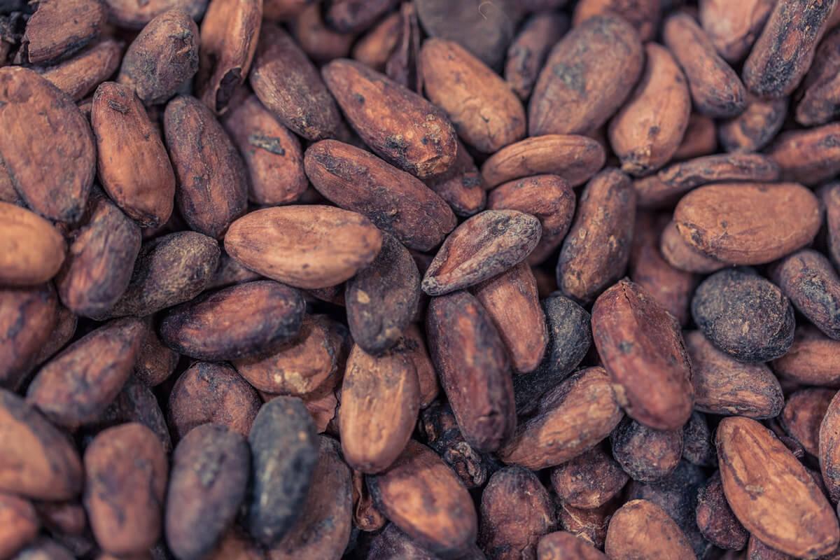 Makroaufnahme von Kakao-Bohnen