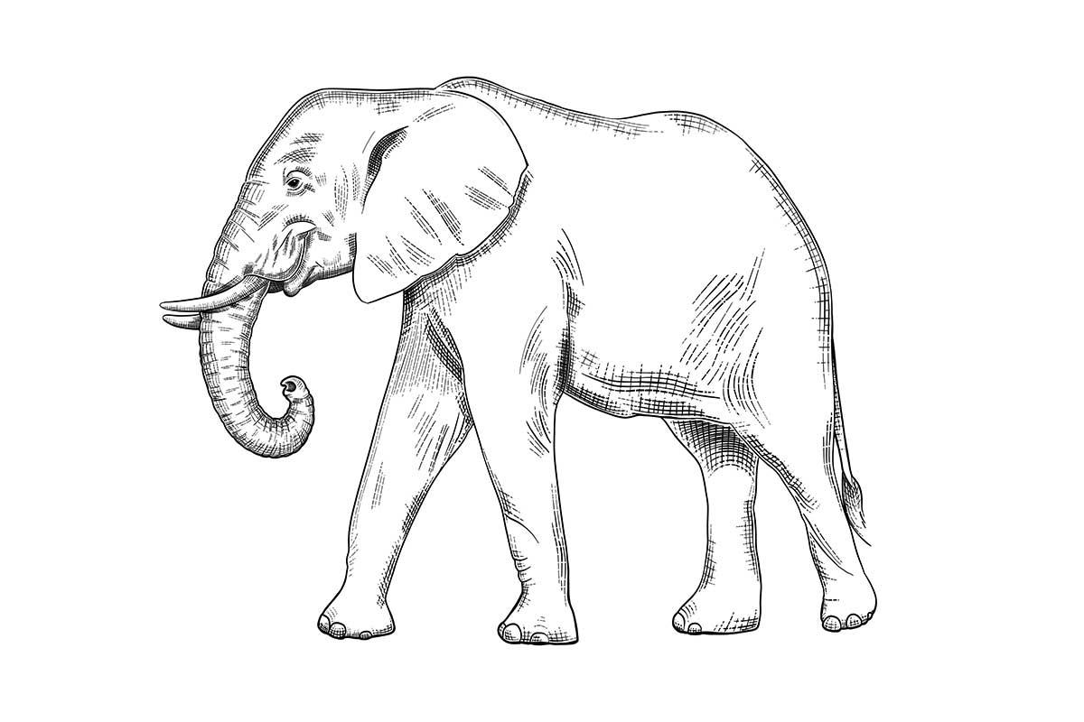 Skizze eines Elefanten